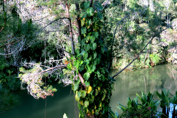 Pangalana Canal